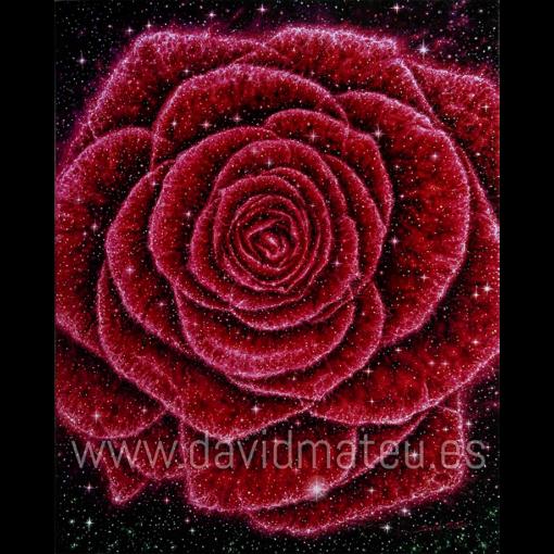 Rosa Galaxia
